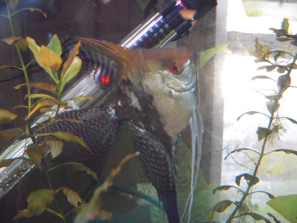 My new fishys! - Page 2 DSCN5118