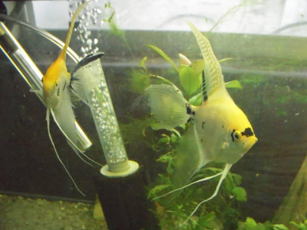 My new fishys! - Page 2 DSCN5124