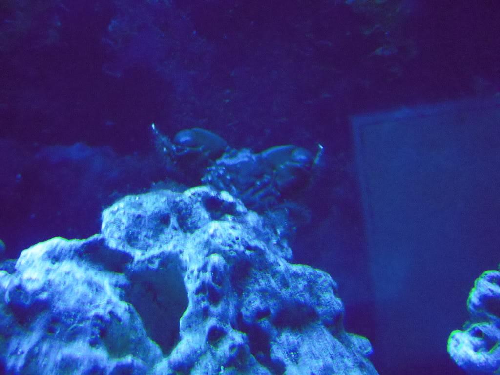 Emerald crab molting DSCN6439