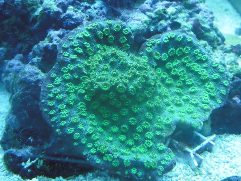 the 100g long reef DSCN7272
