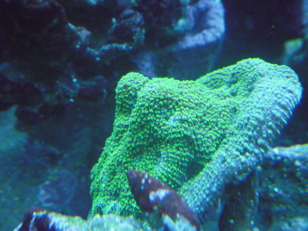 the 100g long reef DSCN7276