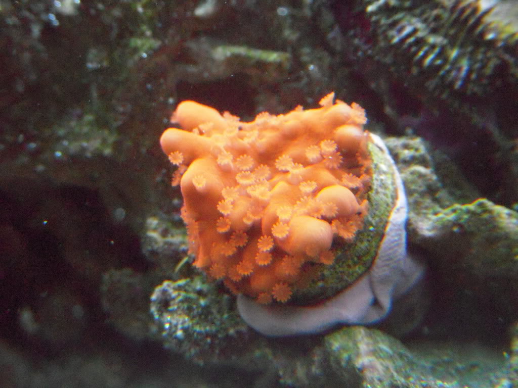 the 100g long reef DSCN7277