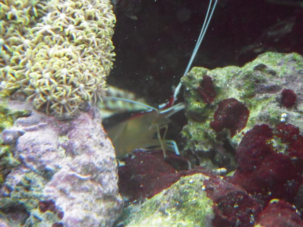 the 100g long reef DSCN7282