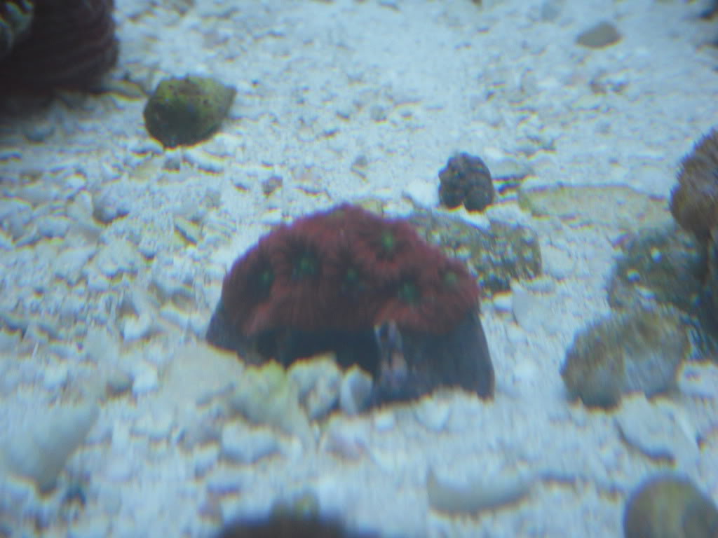 the 100g long reef DSCN7285