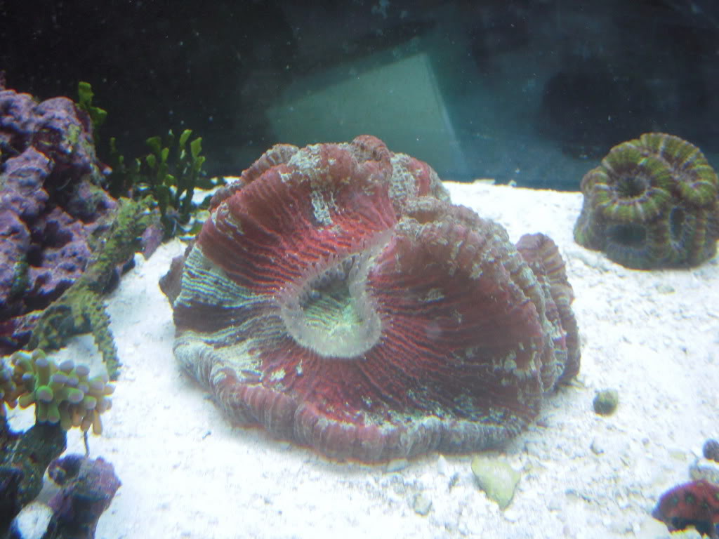 the 100g long reef DSCN7286