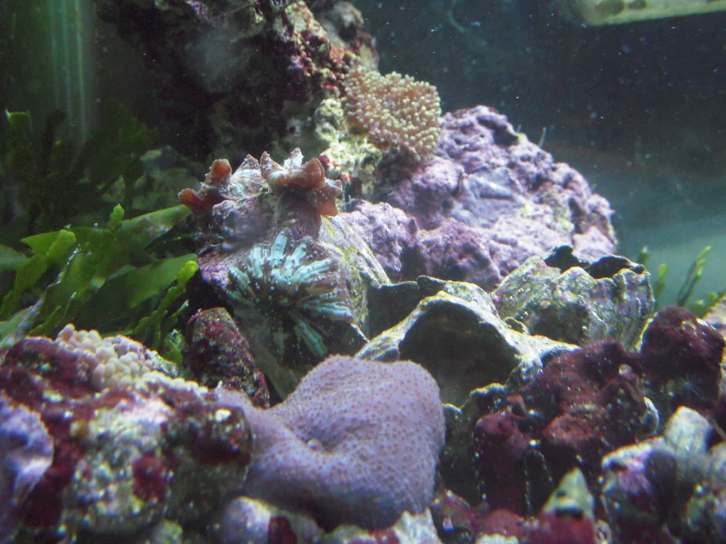 the 100g long reef DSCN7287