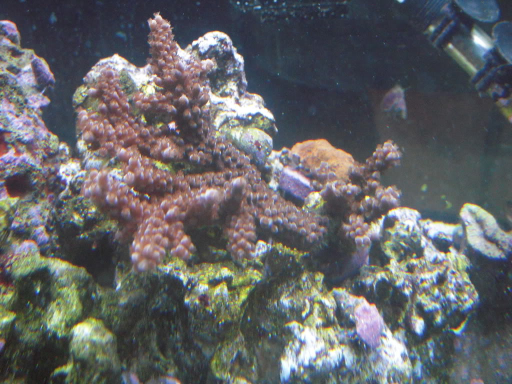 the 100g long reef DSCN7288