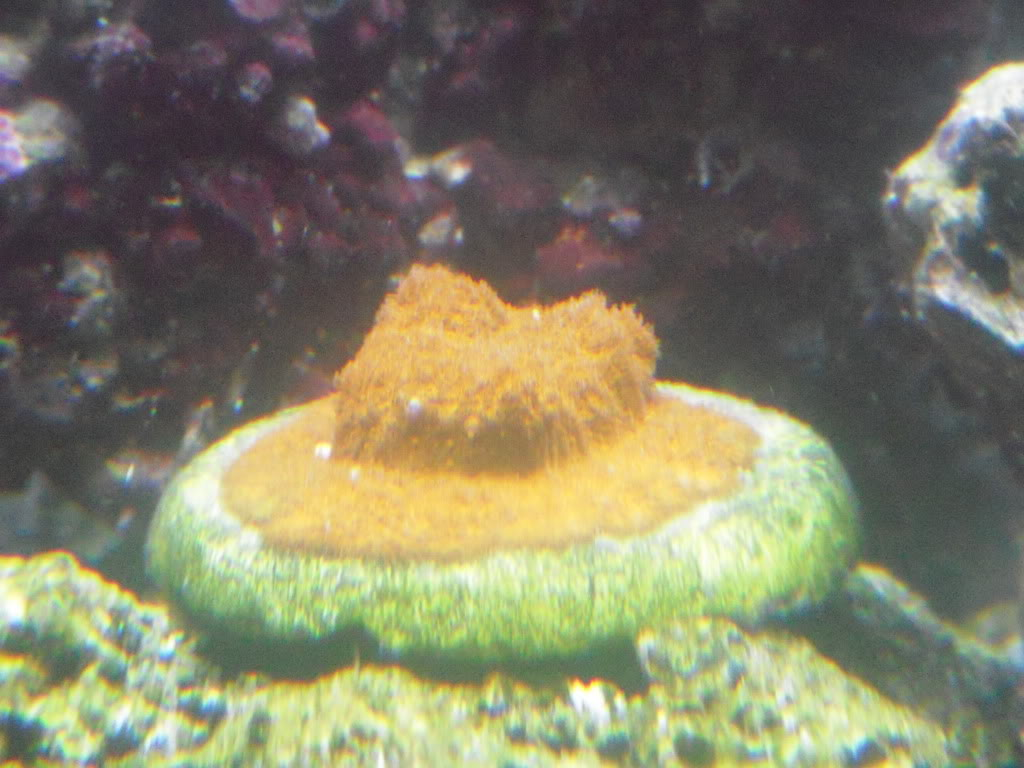 the 100g long reef DSCN7289