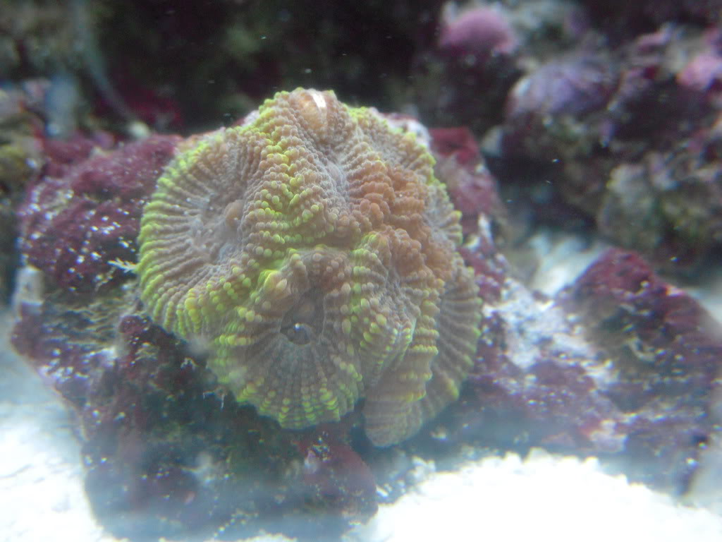 the 100g long reef DSCN7296