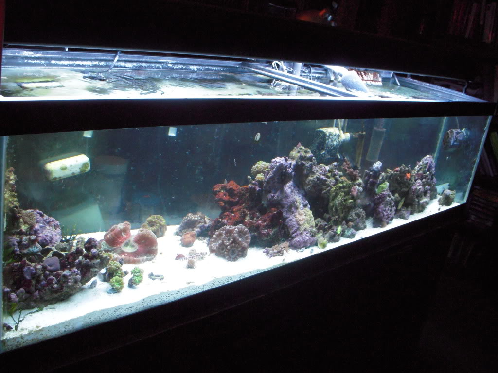 the 100g long reef DSCN7299