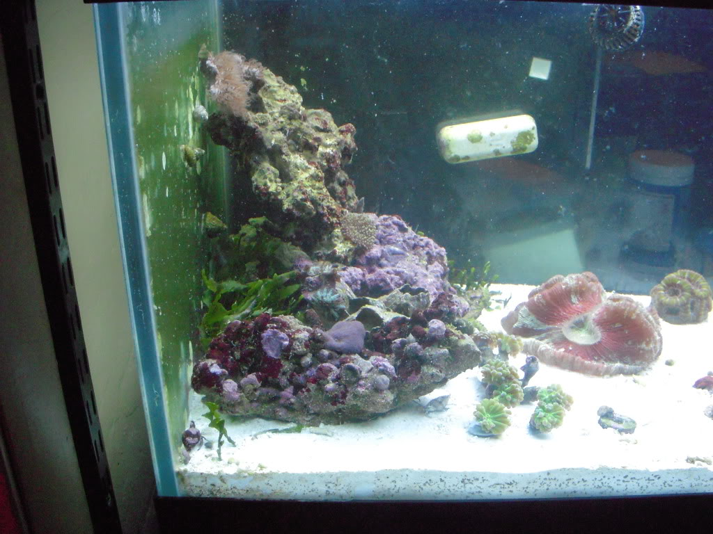 the 100g long reef DSCN7300