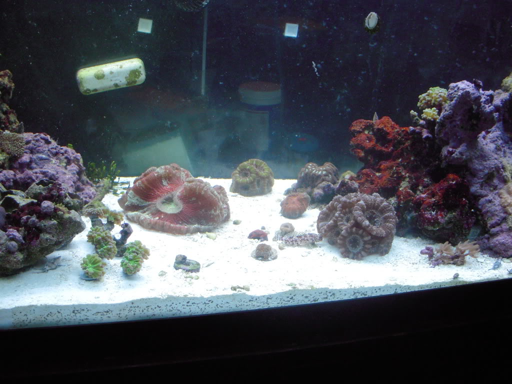 the 100g long reef DSCN7301