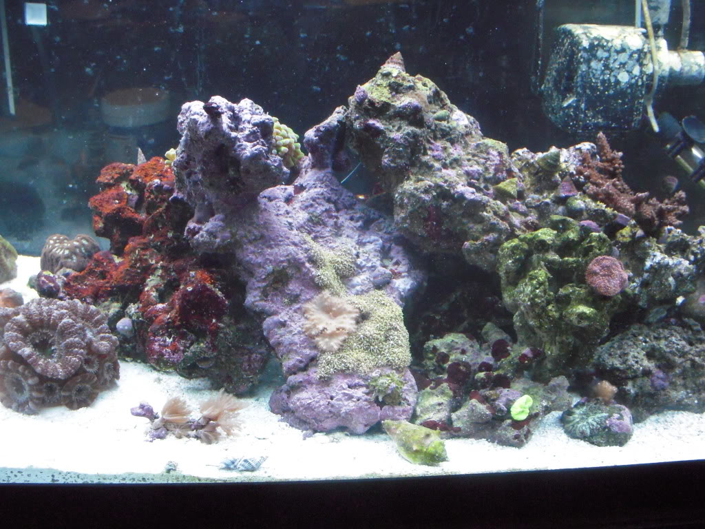the 100g long reef DSCN7303