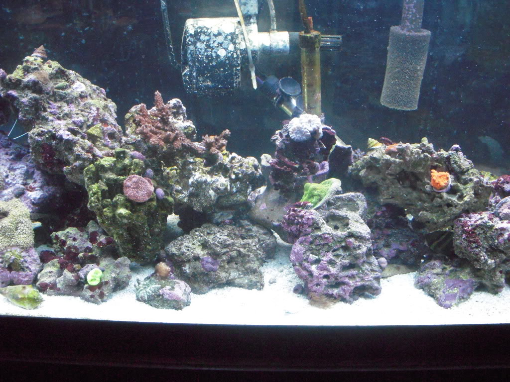 the 100g long reef DSCN7304