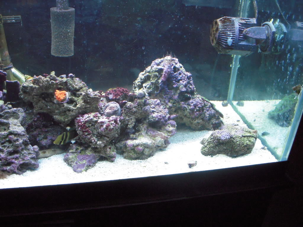 the 100g long reef DSCN7305