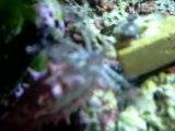 Pink cucumber feeding Th_DSCN6556
