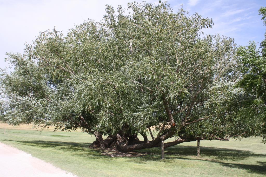 Tree progress IMG_3281_zps7d9fab17