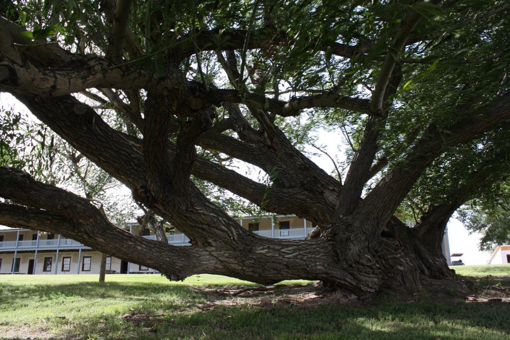 Tree progress IMG_3284_zpsd6a51b58