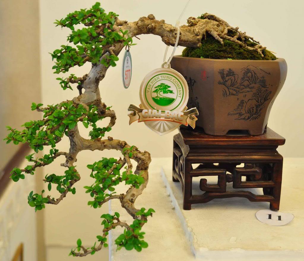 Vietnam International bonsai show - Page 3 Bmn_zpsc489056a