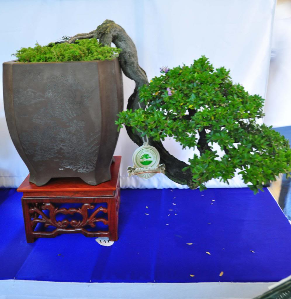 Vietnam International bonsai show - Page 3 Bn_zps86fb53df