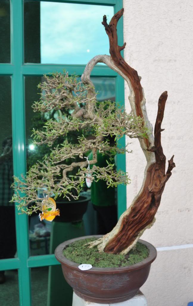 Vietnam International bonsai show - Page 3 Dd_zpsd8226d9b