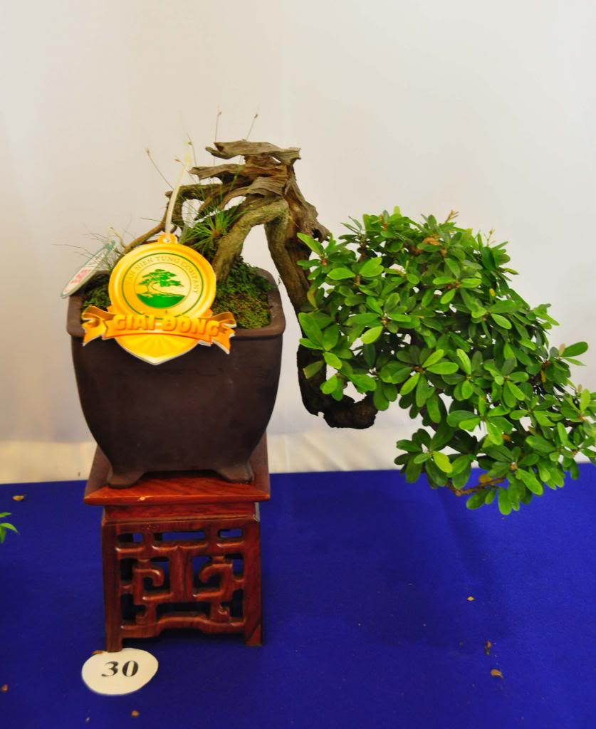 Vietnam International bonsai show - Page 3 Dmn_zps32c87829