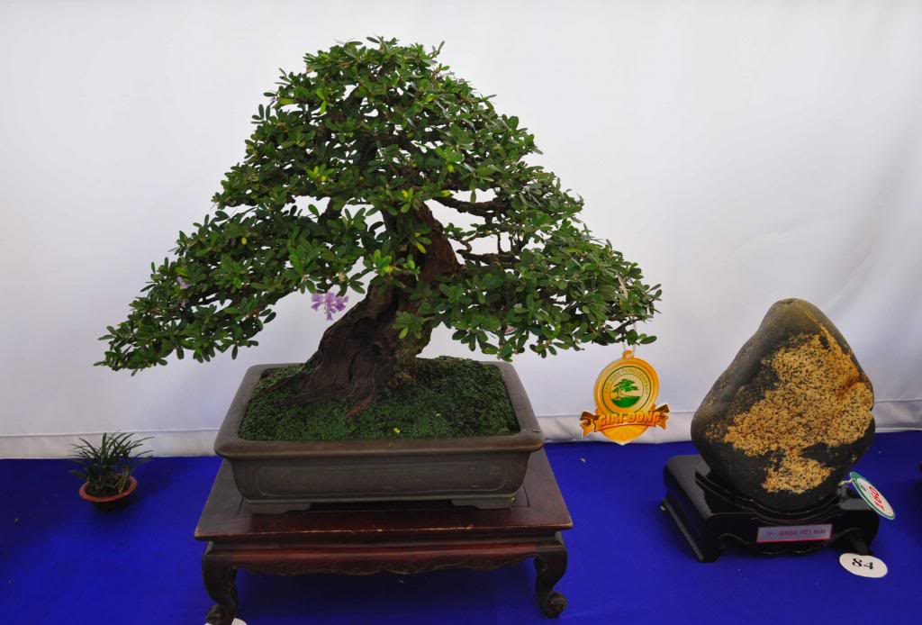 Vietnam International bonsai show - Page 3 Dn_zps725893fb