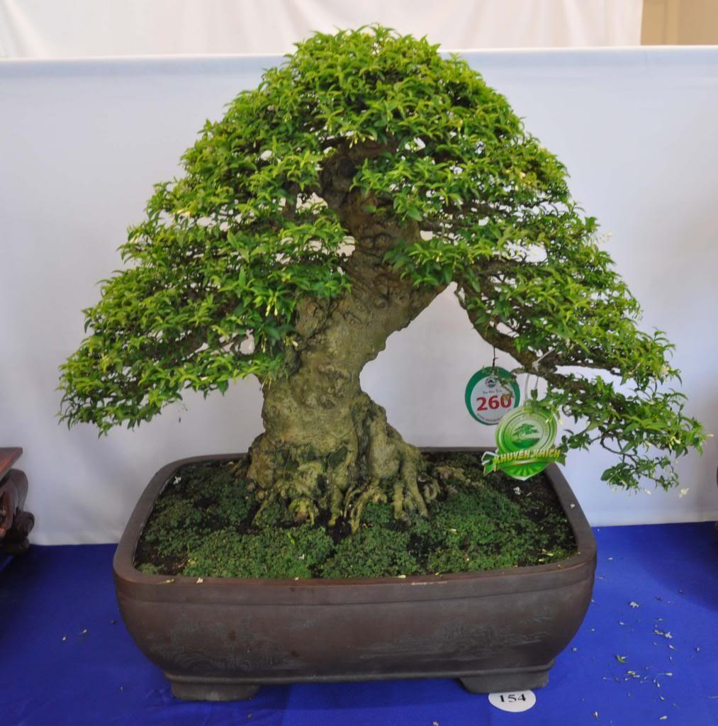 Vietnam International bonsai show - Page 3 Kkn_zpsdae60353