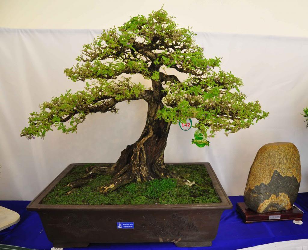 Vietnam International bonsai show - Page 3 Kkt_zpsbfab3bd1
