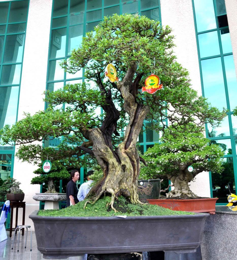 Vietnam International bonsai show - Page 3 Vd_zps8d0cd7ac
