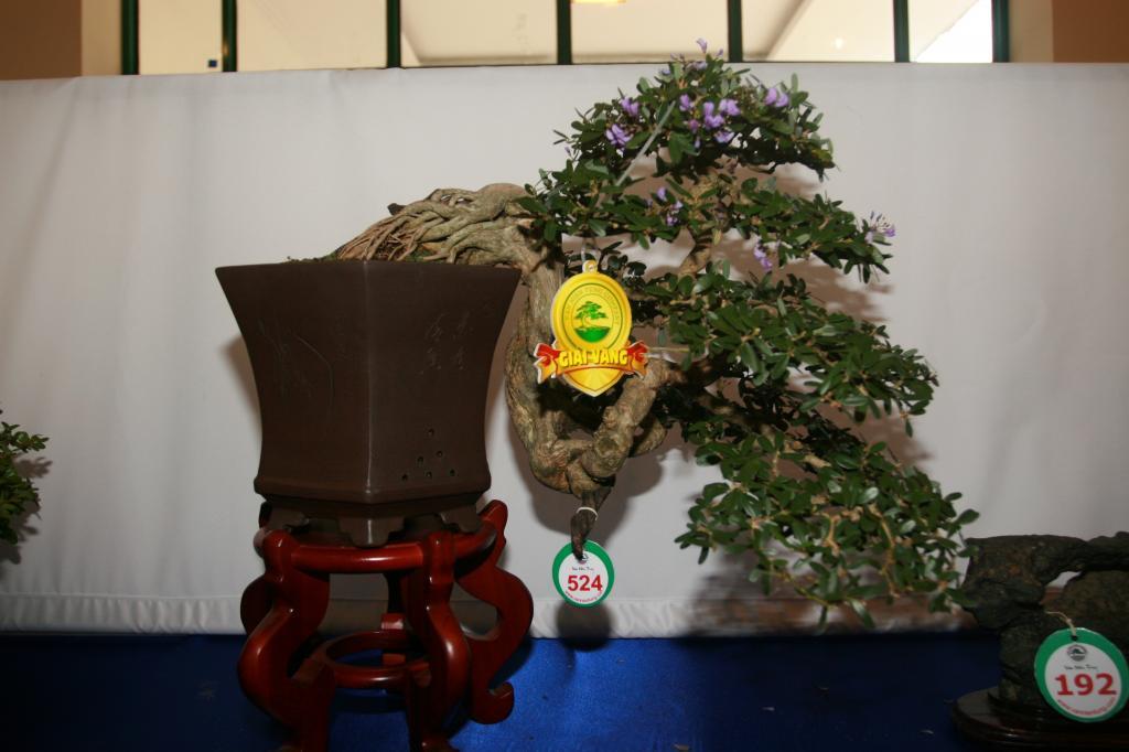 Vietnam International bonsai show - Page 3 Vn_zps2a033cca