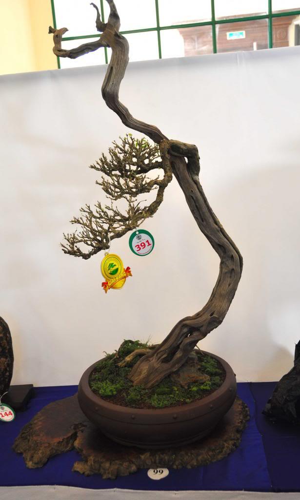 Vietnam International bonsai show - Page 3 Vt_zps6996fd91