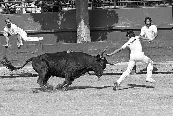 La fé di biou (la foi du taureau) 2009-taureauxCourse-samedi-9-mai_0820
