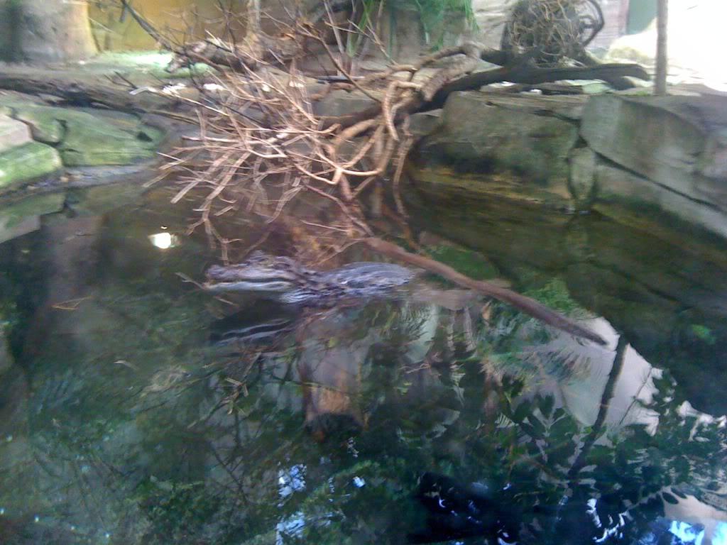 La serre amazonienne - Montpellier IMG_0144