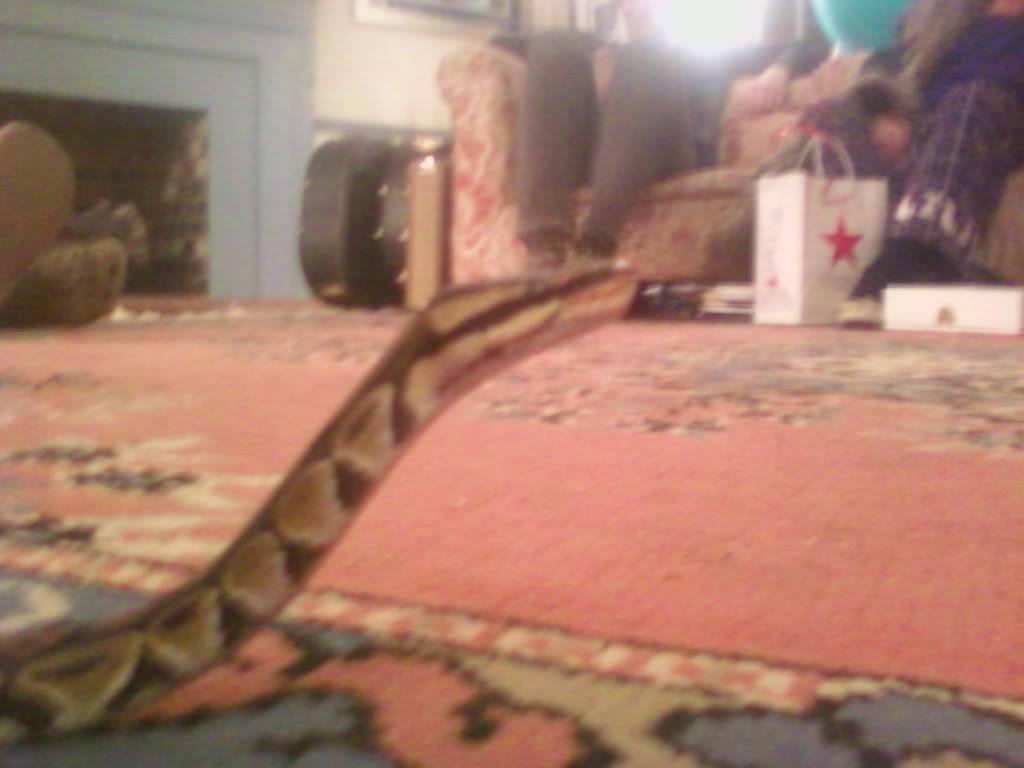 My Ball python Kashmir Photo0244