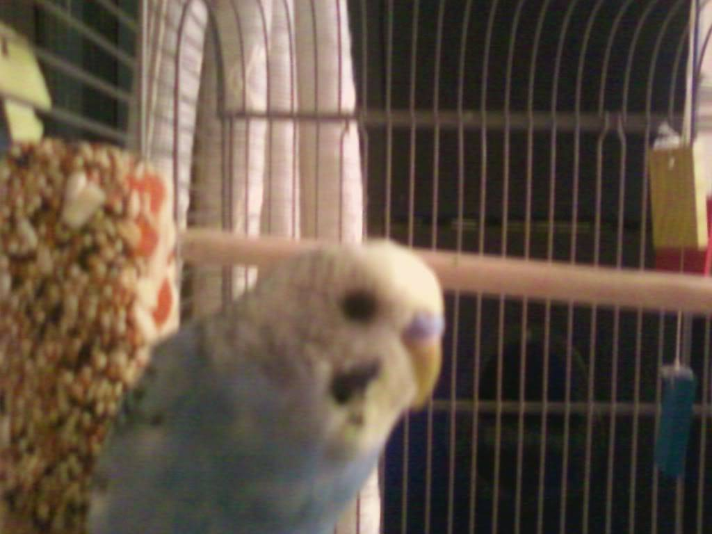 My new parakeet mike!! Photo0335