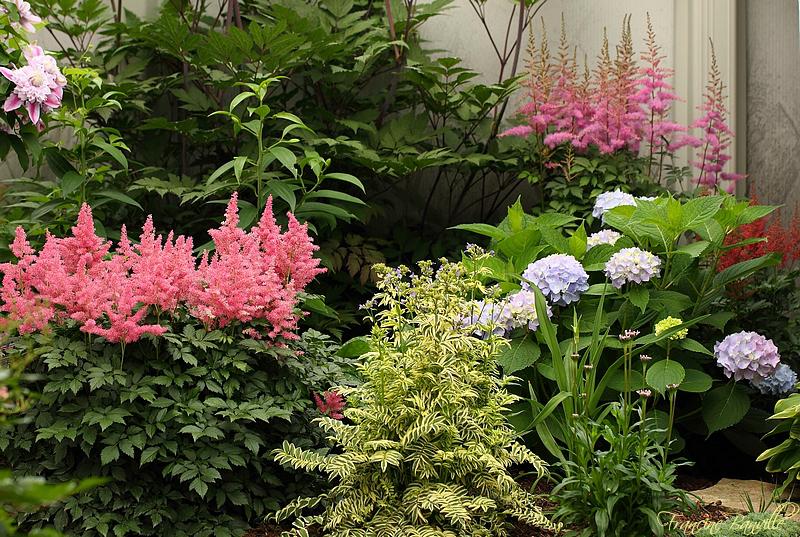 Floraison des Hydrangeas 'Endless Summer Collection' la clef du succès. - Page 2 IMG_4237_filtered_zpseebdcc0d