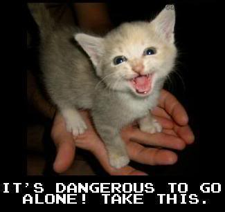 Random Funny Pictures - Page 4 Funny_cat