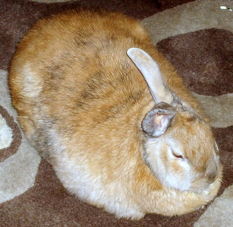 Forum Members Rabbits Caramelonnewrug007