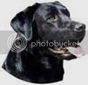 Mujer o perro? Un Dilema... Image008-2
