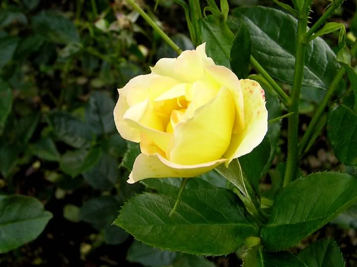 Fotografije cvijeća - Page 38 Dragana028copy1