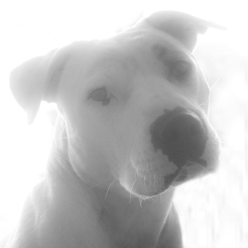 My Darling Daisy IMG_5354_zps3c30f094