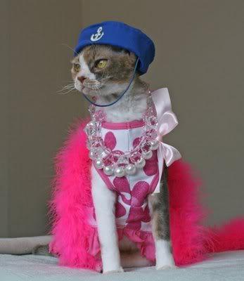 مواقف واطرائف القطط Fashiontip3