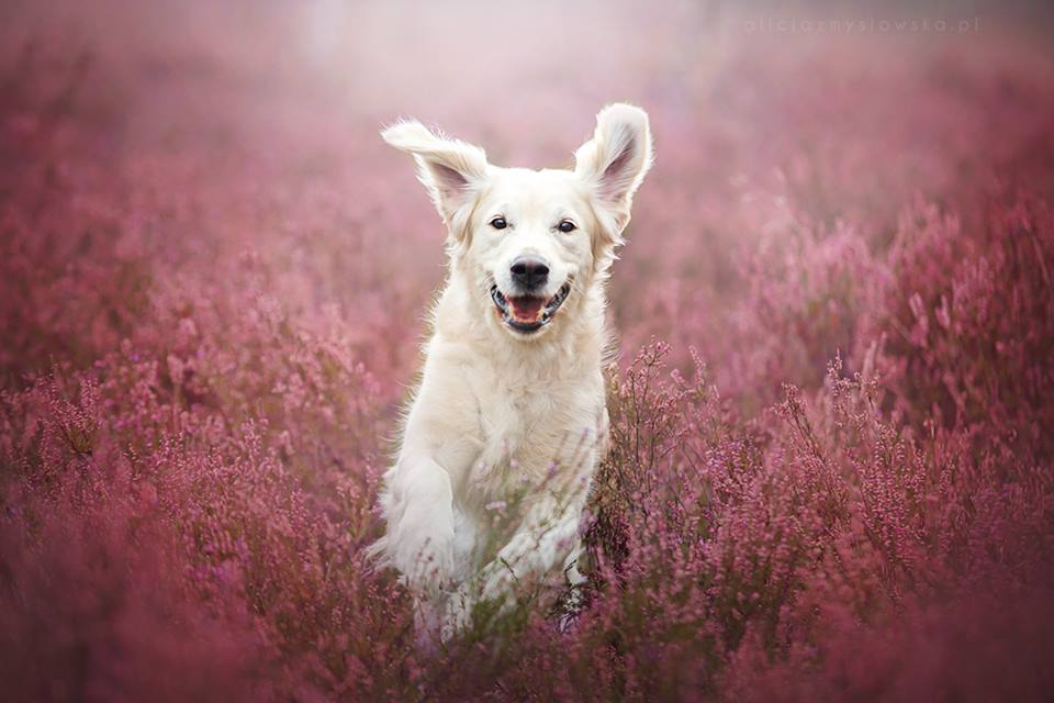 Amazing Dogs Photography Beautiful-Animal-Photography-12