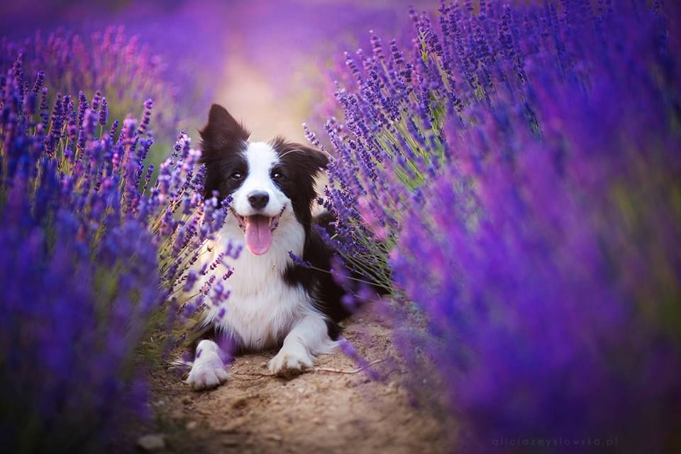 Amazing Dogs Photography Beautiful-Animal-Photography-13