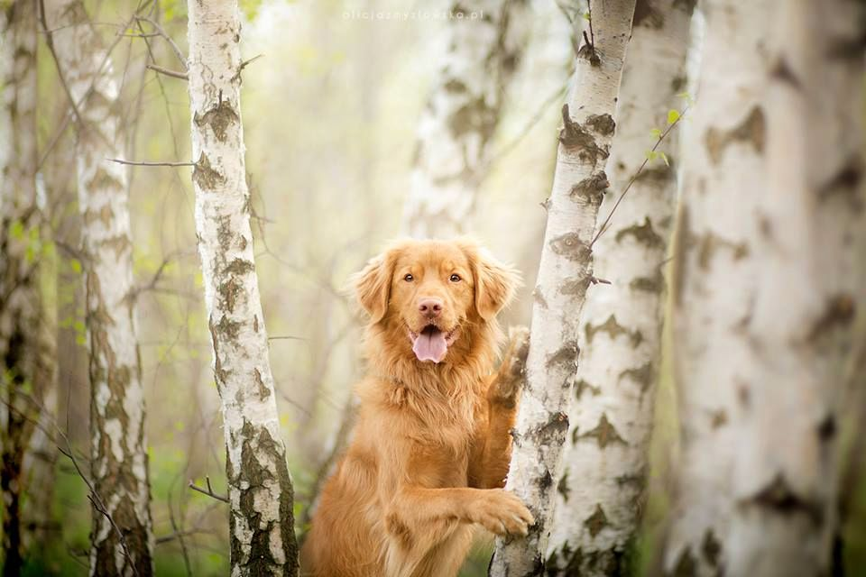 Amazing Dogs Photography Beautiful-Animal-Photography-16