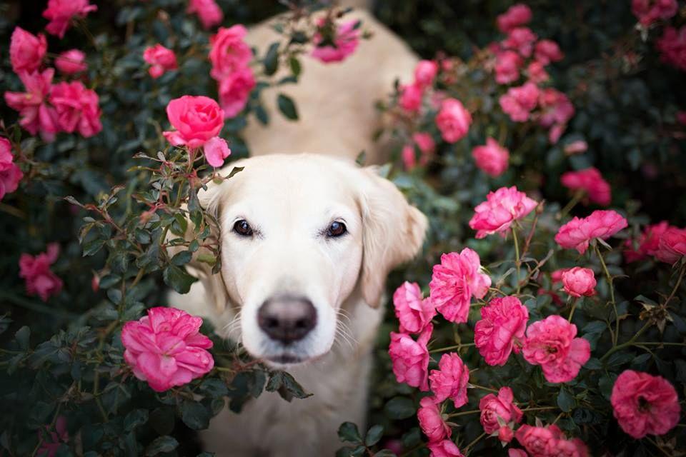 Amazing Dogs Photography Beautiful-Animal-Photography-17