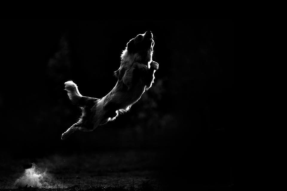 Amazing Dogs Photography Beautiful-Animal-Photography-18