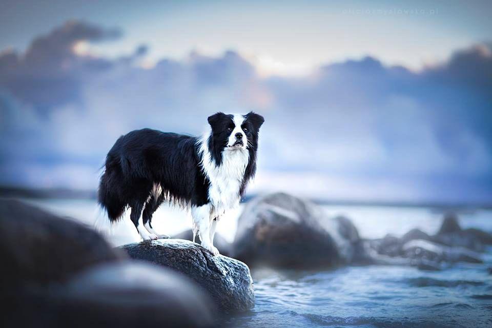 Amazing Dogs Photography Beautiful-Animal-Photography-19
