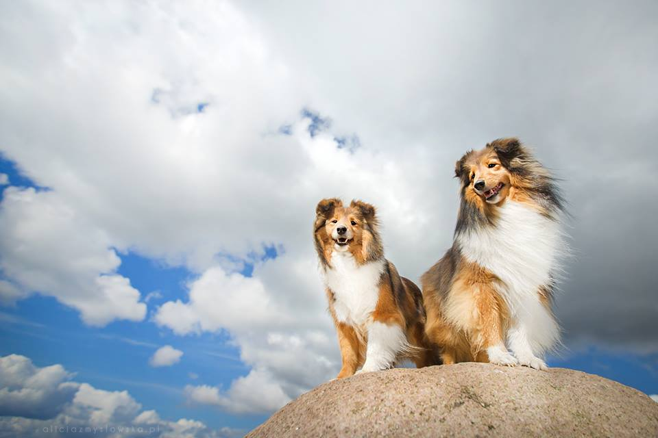 Amazing Dogs Photography - Page 2 Beautiful-Animal-Photography-22
